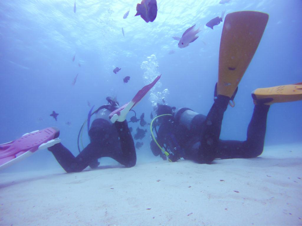 ゴリラチョップで体験ダイビング